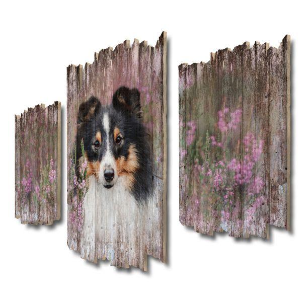 Schwarzer Border Collie Shabby chic 3-Teiler Wandbild aus Massiv-Holz