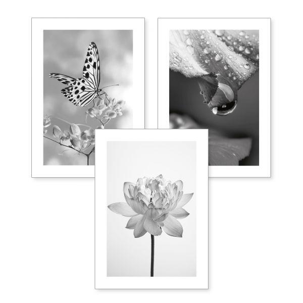 3-teiliges Poster-Set | Zarte Blüte | optional mit Rahmen | DIN A4 oder A3