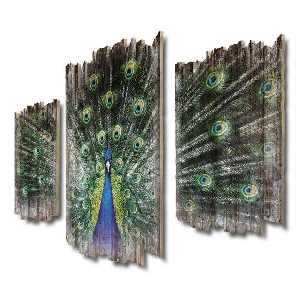 Pfauenrad Shabby chic 3-Teiler Wandbild aus Massiv-Holz