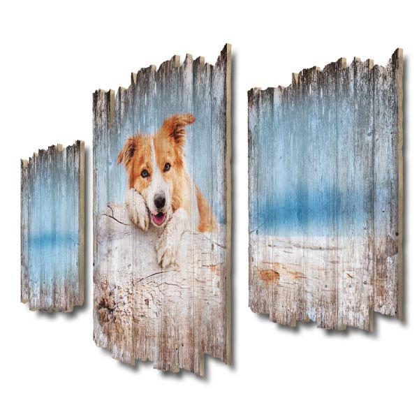 Border Collie Strand Shabby chic 3-Teiler Wandbild aus Massiv-Holz