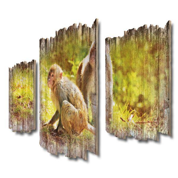 Rhesusaffen Shabby chic 3-Teiler Wandbild aus Massiv-Holz